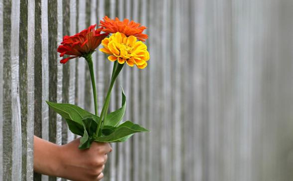 Ilustrace: Pixabay.com