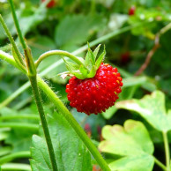 červen
